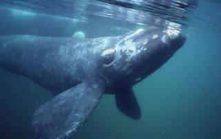Whale Song Sea Mist