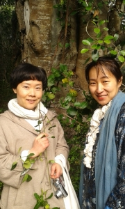 Flower Essence Practitioners Kumi and Shinobu with the White Pear Tree