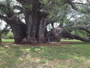 Melissa at Sagole Baobab