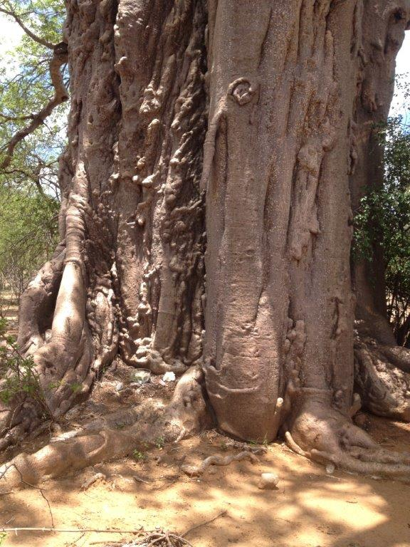 Baobab site of essence making